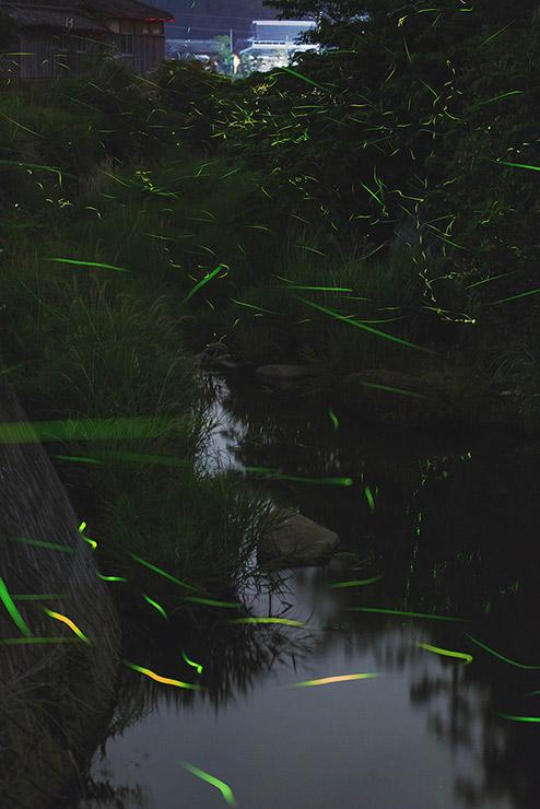 幻想的な生田村田尻川の蛍