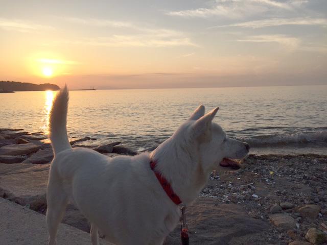 淡路島のサンセットを見に海へ散歩