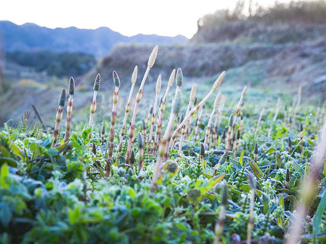 淡路島の春