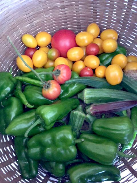 淡の農園の夏野菜