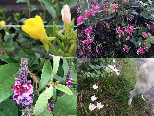 お散歩コースで見つけた素敵な野の花