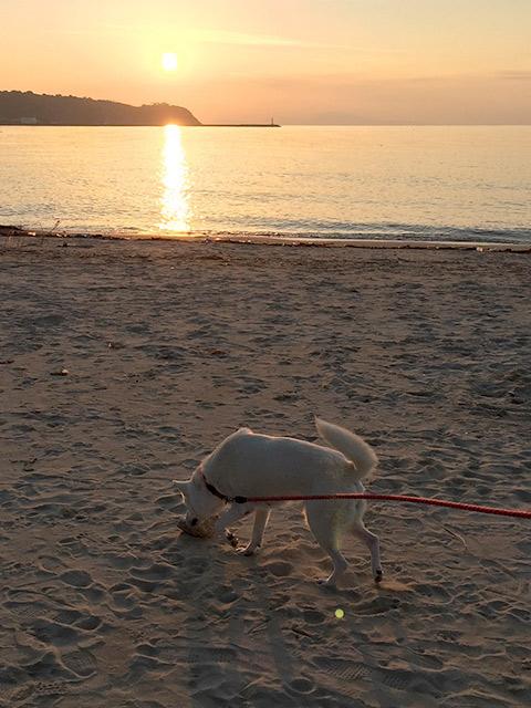多賀の浜が、距離が長くて設備も色々整っていてオススメです