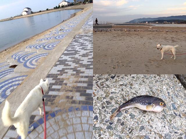 多賀の浜で散歩や釣り、磯遊び