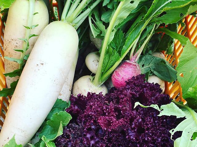 淡の畑の冬野菜もスクスク育っています。