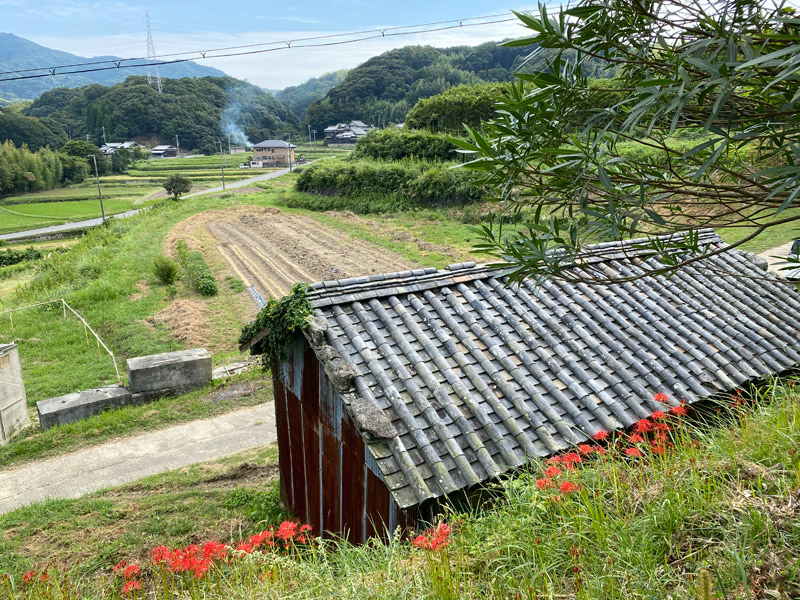 淡路島は秋分を迎えて、すっかり秋景色になりました。