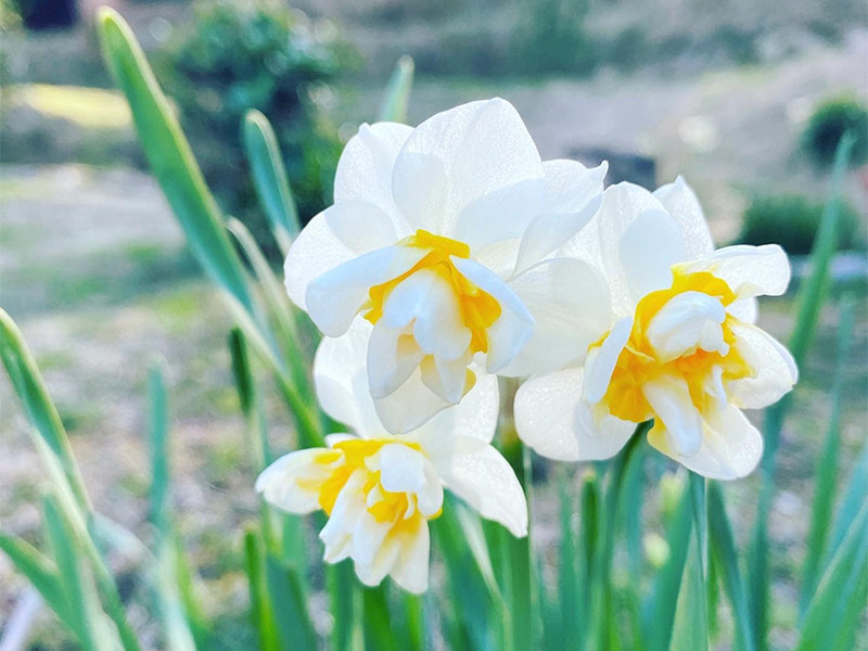 庭の花たちも、少しづつ咲き始めました